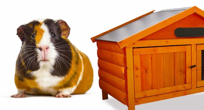 Best Wooden Guinea Pig Cage Options For Your Furry Friend SN long