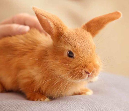 rabbit care