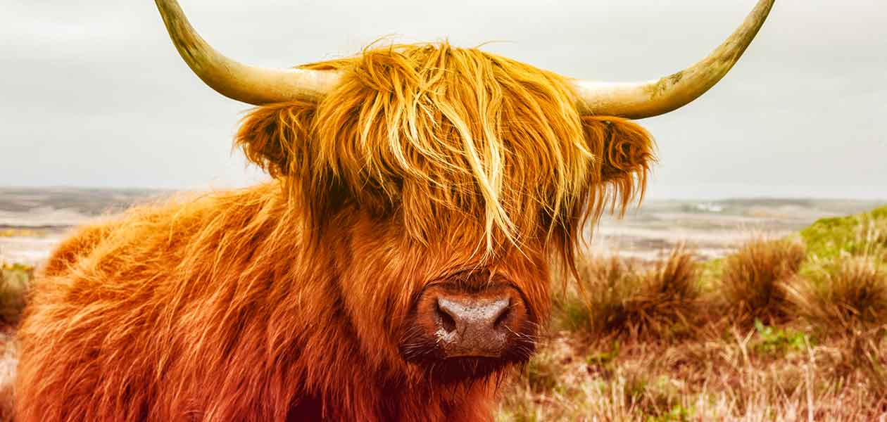 26++ Good male cow names information