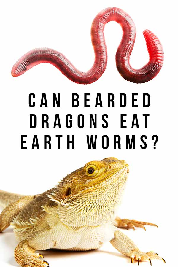 can bearded dragons eat earth worms