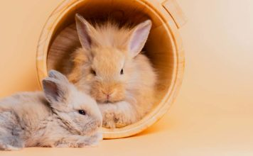 do rabbits sleep with their eyes open