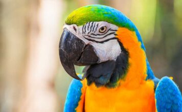 macaw names