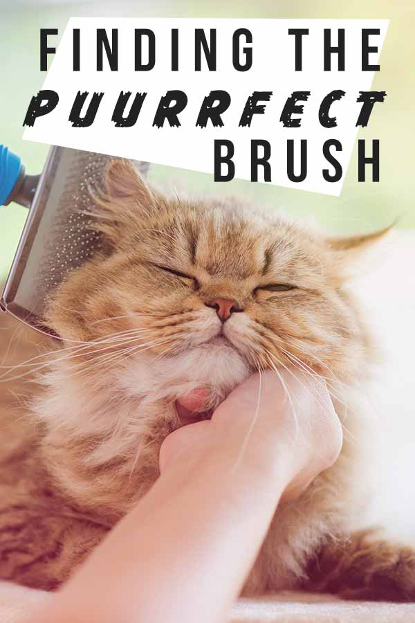 Ginger cat entitled finding the purrfect brush