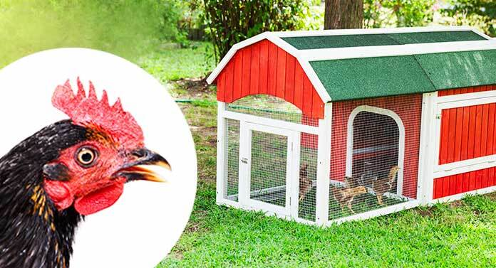 best chicken coop