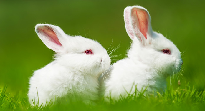 why do white rabbits have red eyes