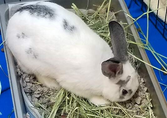 why do rabbits dig in their litter box