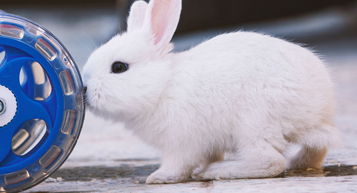 why do rabbits nudge things
