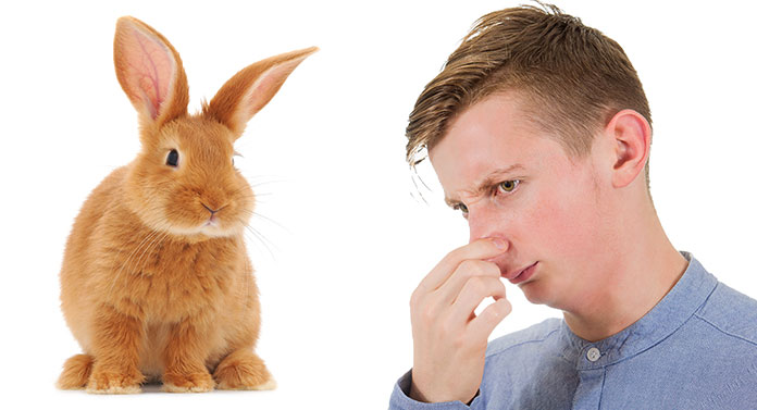 why do rabbits stink