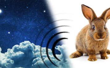 why do rabbits thump at night