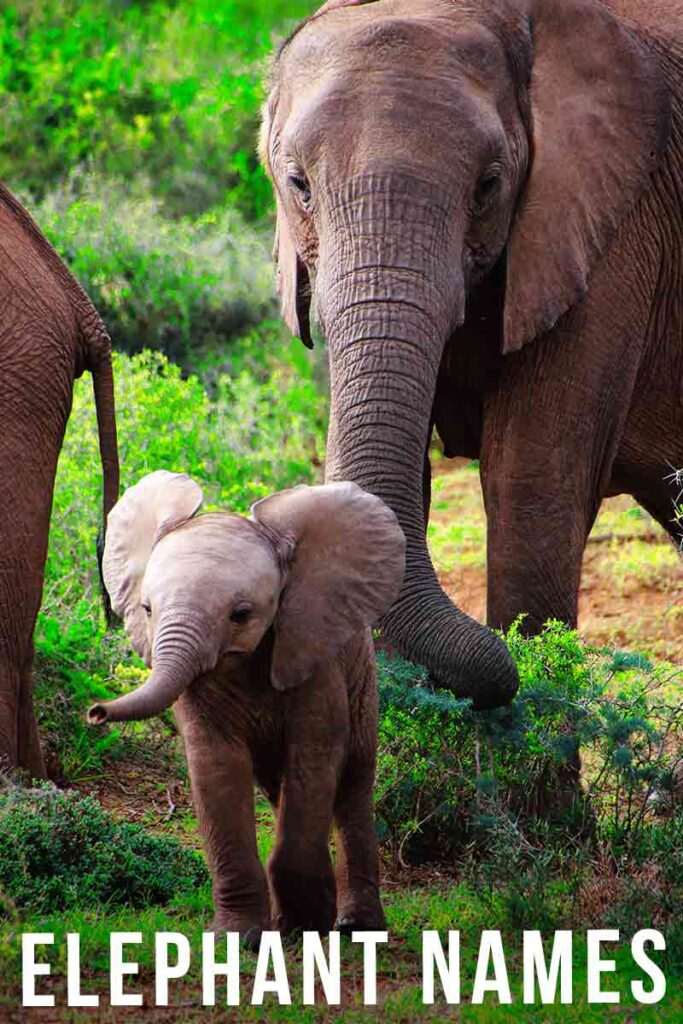 elephant names