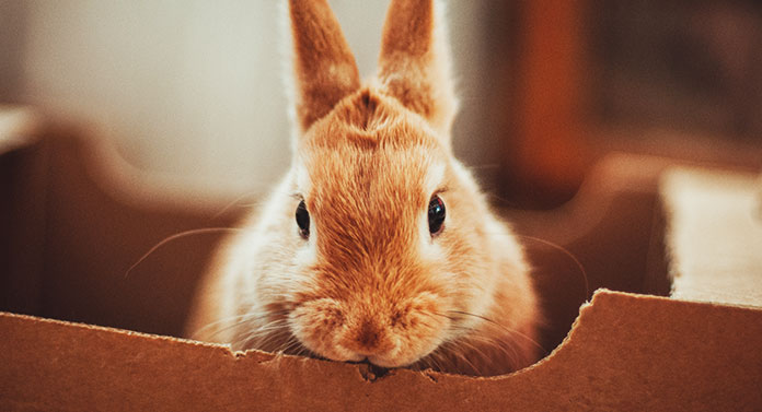 why do rabbits chew on their cage