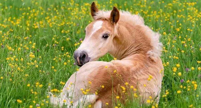 cute horse names