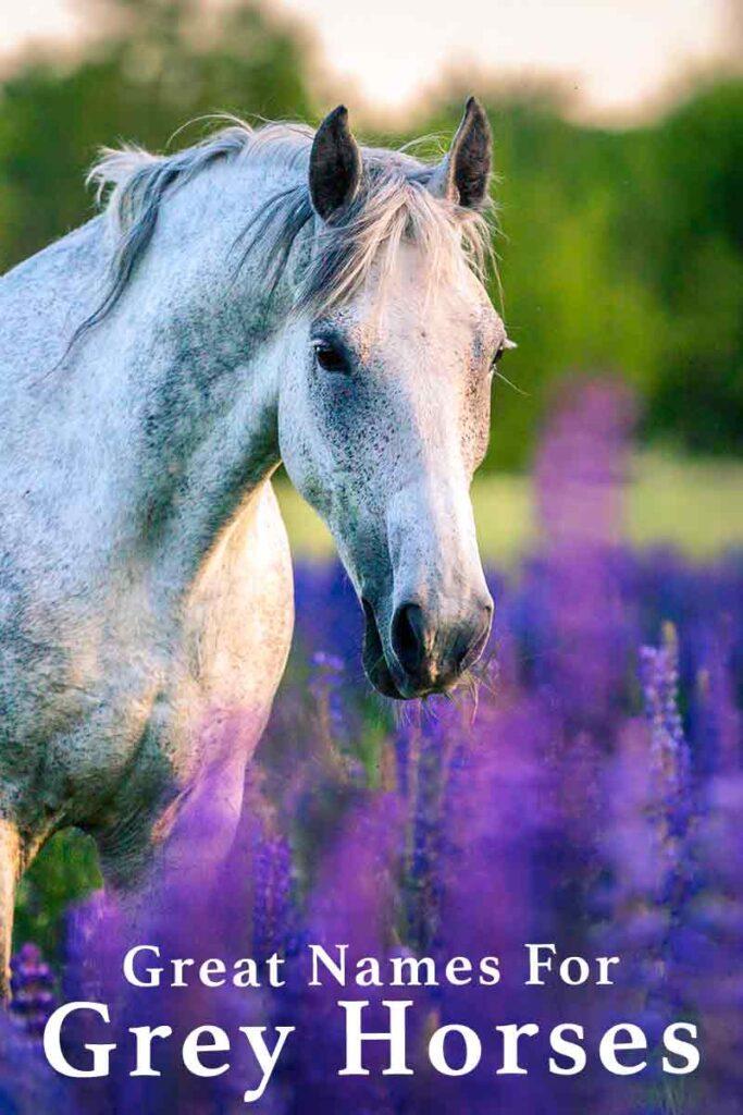 grey horse names