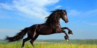 black horse names