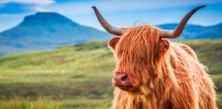 bull names
