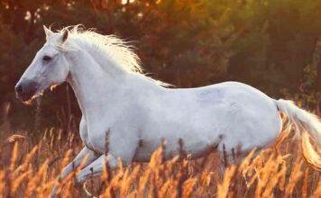 white horse names