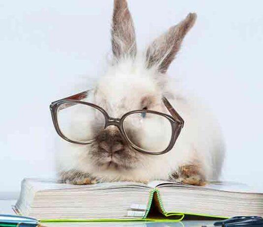 are rabbits smart