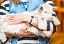 female goat names