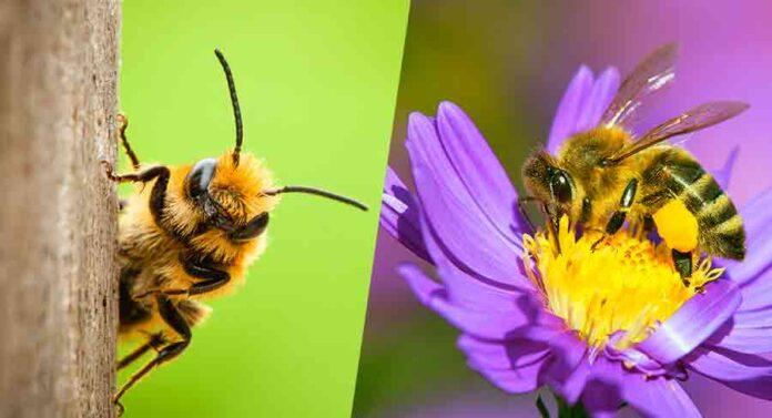 bee names