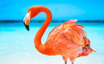flamingo names