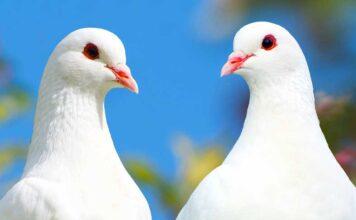 dove names